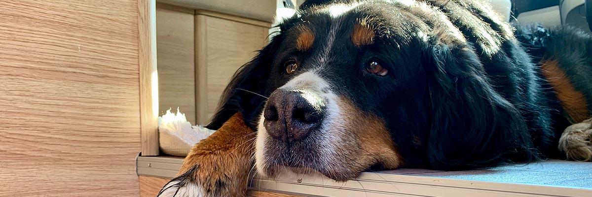 Wohnmobil für Hunde von L-Parts on Tour