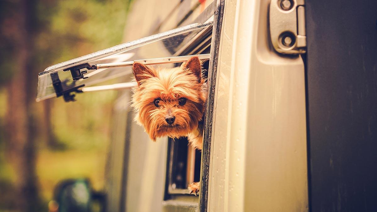 Wohnmobil mieten mit Hund bei L-Parts on Tour